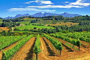 Recorrido guiado de un día a Montserrat y Penedès desde Barcelona