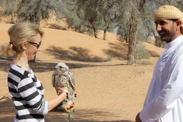Experiência interativa de falcoaria e...