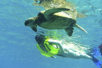 ' ' from the web at 'https://cache-graphicslib.viator.com/graphicslib/thumbs360x240/9887/SITours/north-shore-turtle-cove-guided-snorkeling-tour-in-haleiwa-476649.jpg'