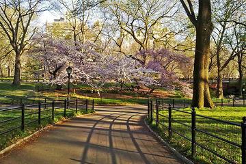 Central Park fietsverhuur