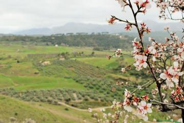 Transfert privé de Séville à Malaga, avec visite de Ronda