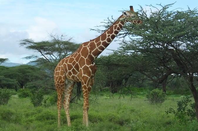 Deluxe Kenya flying safari