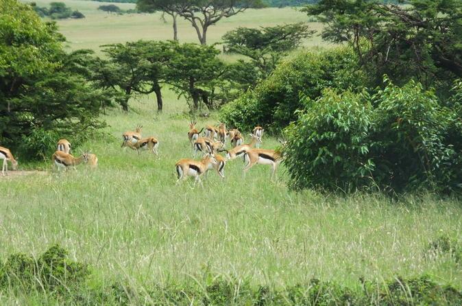 Special offer package 1 Night Lake Nakuru 2 Nights Mara