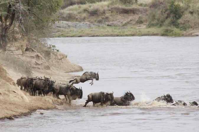 3-Day Masai Mara Safari in a Luxury Tented Camp