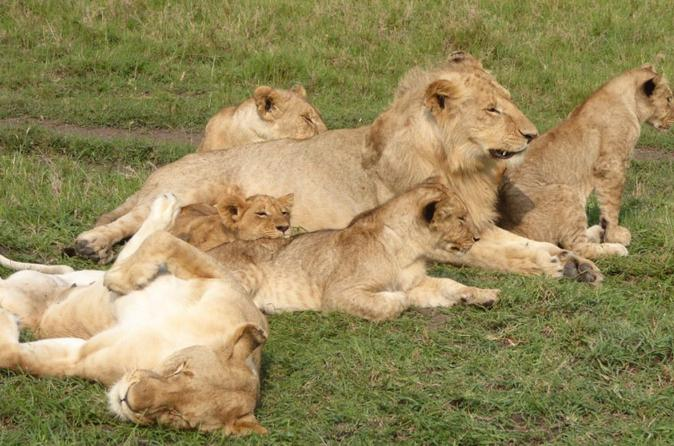 Africa Safari for Group of 4 in Kenya -  Budget Masai Mara National Reserve  in 3 days