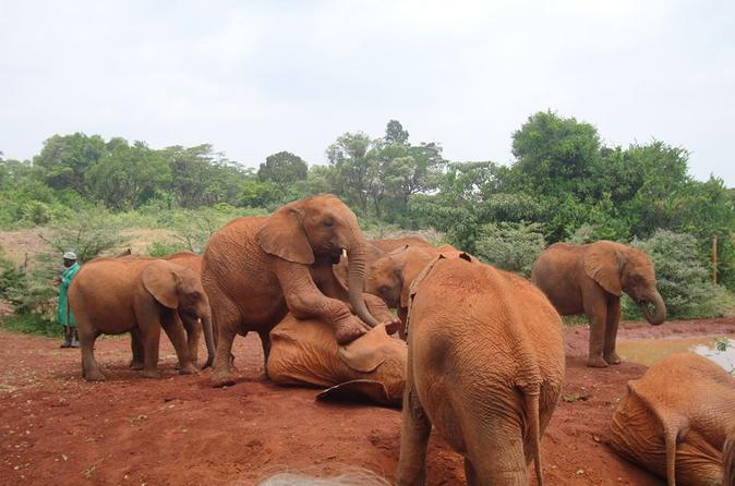 Elephants Orphanage Tour From Nairobi