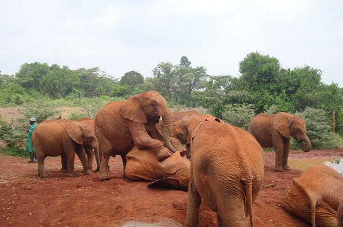 Elephants Orphanage Tour From Nairobi with Optional Giraffe Centre