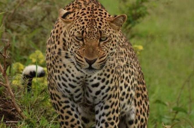 Mount Kenya Chimpanzee Sanctuary and Aberdares National Park Tour for 2 days
