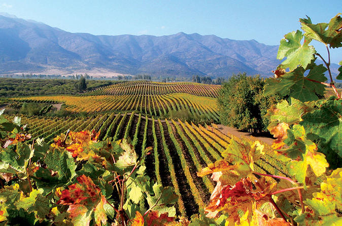 Full-Day Private Tour: Isla Negra, Pomaire and Matetic Vineyard