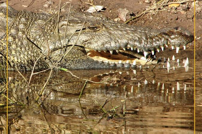 Ranthambore Crocodile Safari