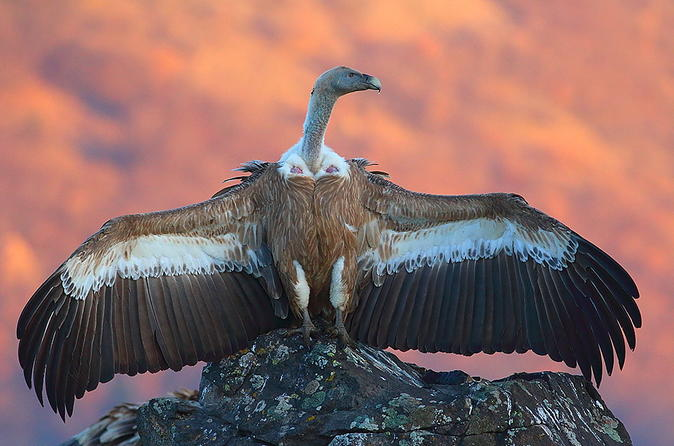 Two-day Birding Trip: The Eastern Rhodopes & Sakar