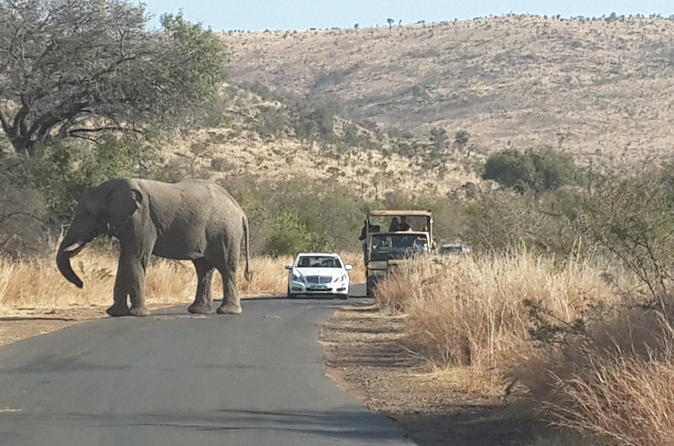 Pilanesberg National Park Safari from Johannesburg