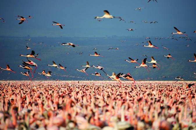 Lake Nakuru Guided Day Trip from Nairobi Kenya, Africa