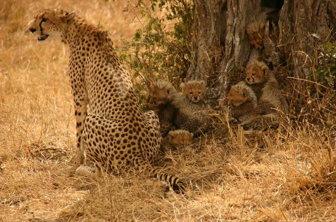 Nairobi National Park, Elephant Orphanage and Giraffe Feeding Guided Day Tour in Nairobi Kenya, Africa