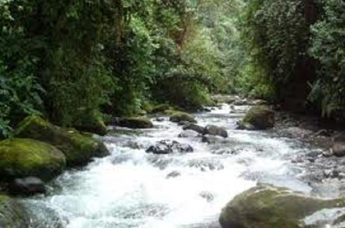 Private Tour: 2-Day Mindo Cloud Forest Overnight Tour from Quito