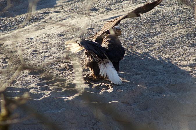 Eagle Watch Adventure