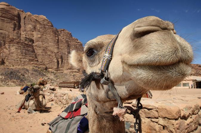 Excursão turística para Petra saindo de Amã