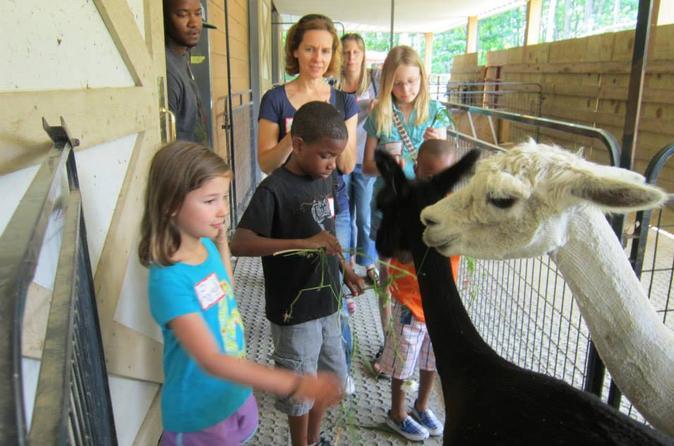 Holiday Tour of an Alpaca Farm