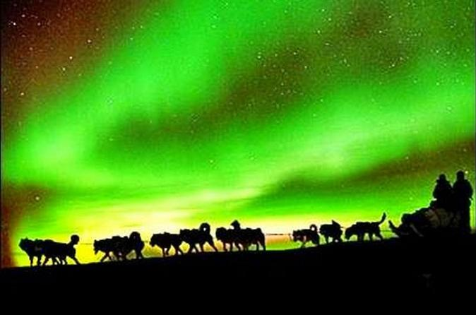 Great Fairbanks Northern Lights Viewing Including Dinner And 1 Hour Dog Sledding  In United States North America Design