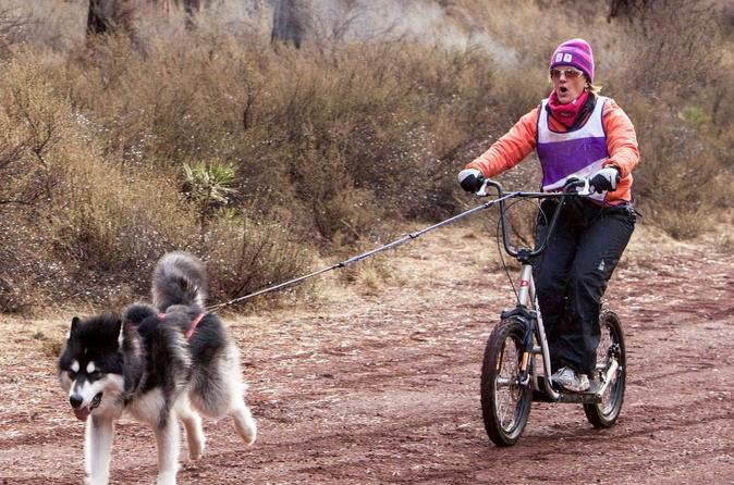 Dog powered scooter jor ing in pagosa springs in pagosa springs 308478