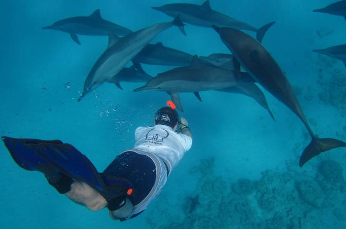 Hurghada: Snorkeling Trip At Dolphins House And Fun Ride