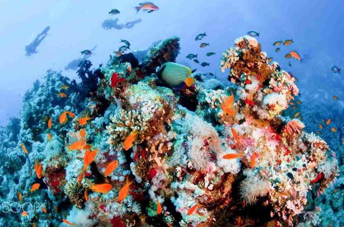 Snorkeling At Ras Mohammed Park By Boat - Sharm El-sheikh
