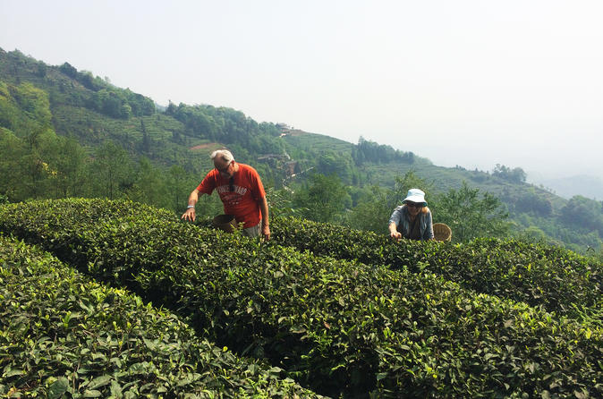 Private Mengdingshan Tea Picking And Making Experience Day Tour With Local Lunch - Chengdu