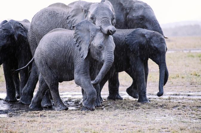 13-Day Overland Kenya and Tanzania Adventure Tour from Nairobi