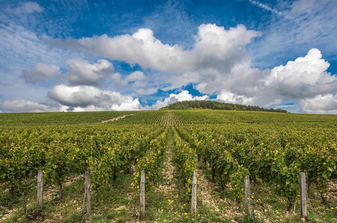 Private Day Tour: Chablis Vine from Paris