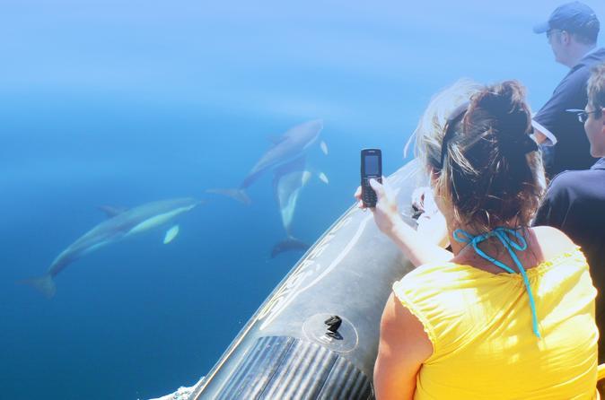 Excursão de golfinhos e caverna saindo de Albufeira