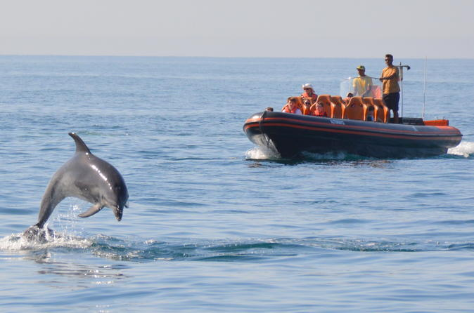 Private dolphin watching and cave tour from albufeira in albufeira 453142