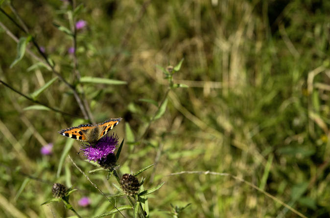Fauna and flora connemara national park 1 day self guided tour in clifden 333096