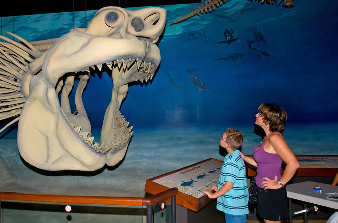 Fossil and shark teeth hunt adventure package with lunch and dinner in solomons 280482