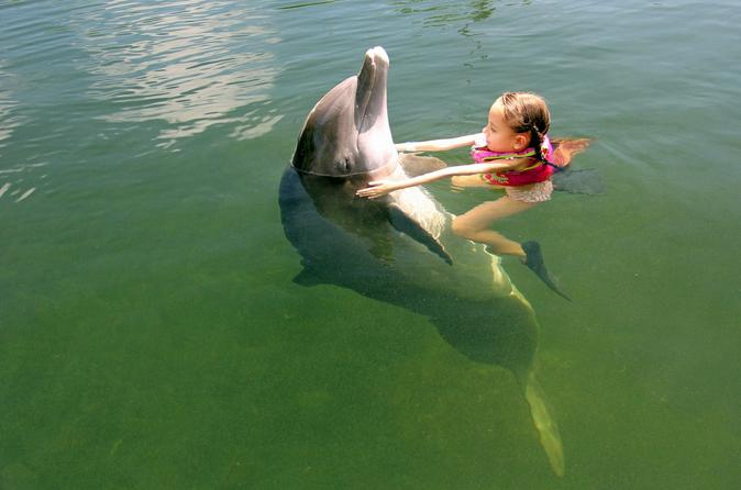 Swim with the dolphin at theater of the sea in islamorada 314823