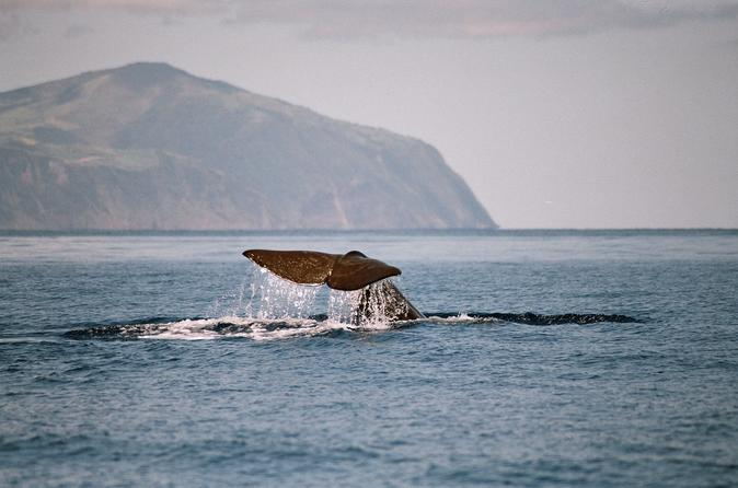 Whale Watching Half Day Tour At Terceira Island
