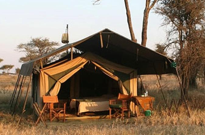 5 day private safari to tarangire serengeti national park and in moshi 200868