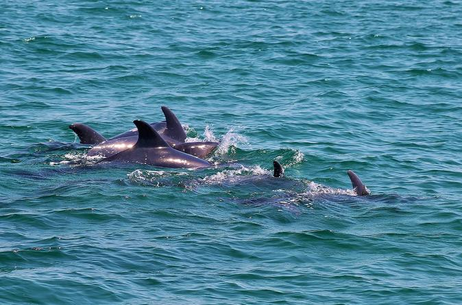 Dolphin Watching Tour from Lisbon