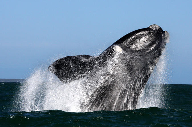 Whale watching from gansbaai in gansbaai 200295