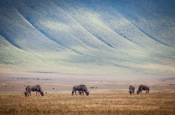 10-Day Kenya & Tanzania 4WD Safari Adventure