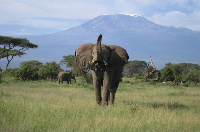 6-Day Masai Mara Interactive, Lake Nakuru & Amboseli Safari