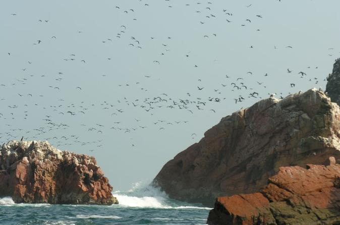 Ballestas islands sightseeing boat ride from paracas in paracas 226486