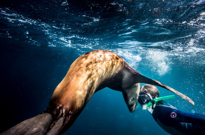 Swimming and snorkeling with sea lions in the sea of cortez in todos santos 225846
