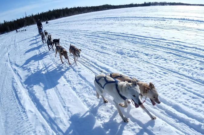 Yellowknife Dog Sledding Tour