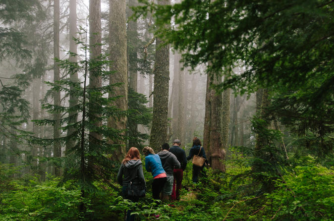 Wild Edible Plants: Rainforest Walking Tour with Lunch