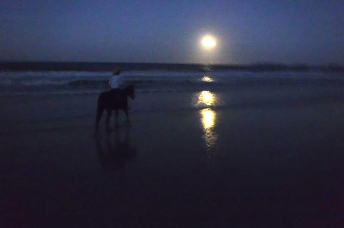 Full moon horse ride at rainbow beach in rainbow beach 203081