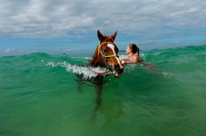 Horse swimming ride from rainbow beach in rainbow beach 204272