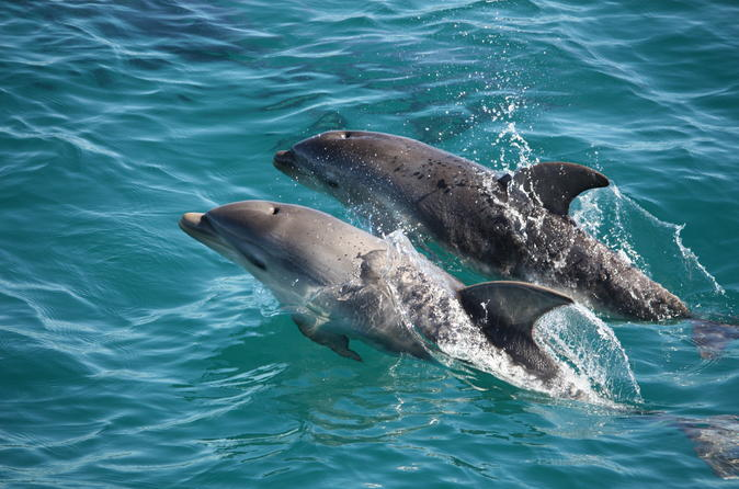 Mornington peninsula dolphin and seal cruise from sorrento in sorrento 225919