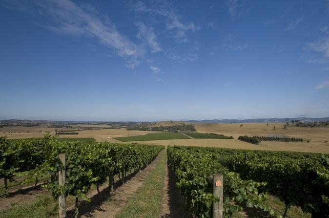 Yarra Valley Winery Tour from Melbourne Including Lunch and Local Guide