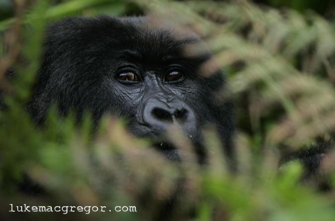 Gorilla trek experience from kigali in kigali 257789