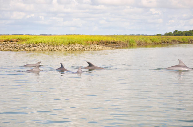 2 hour dolphin boat tour in charleston 313994